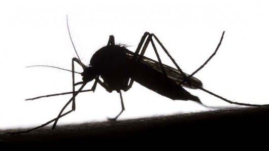 malariamosquito